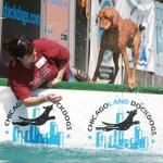 Rusty DockDogs 7 2011 c