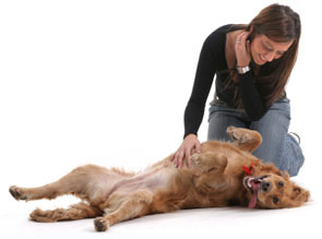 Classes Offered At Narnia Pet Behavior Training Narnia Pet